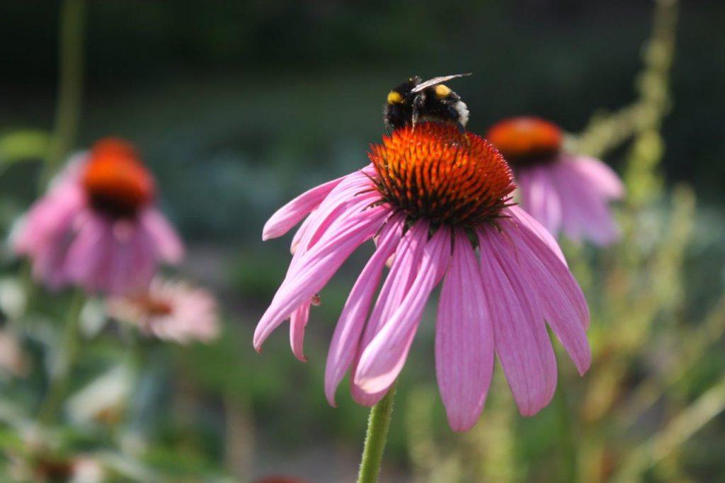 flower-n-bee